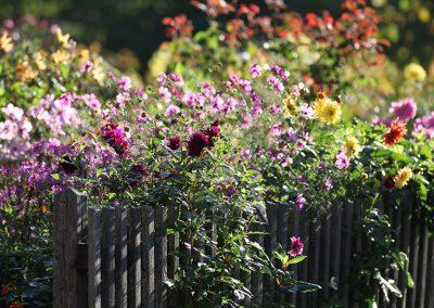 Bild von Blumen im Sommer