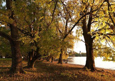 Bild von Bäumen im Herbst